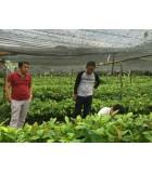 Bibit Kakao Unggul di Sulawesi Tenggara